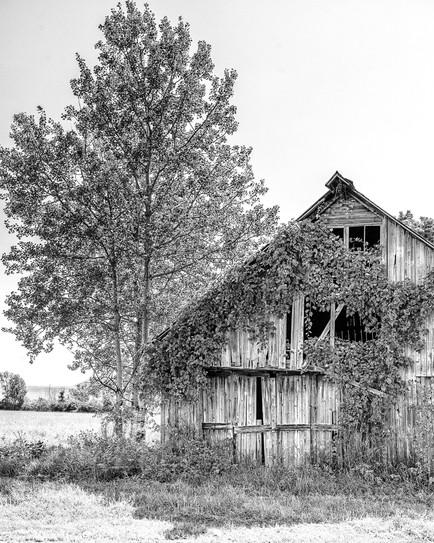 Tree and Barn in VT.jpg