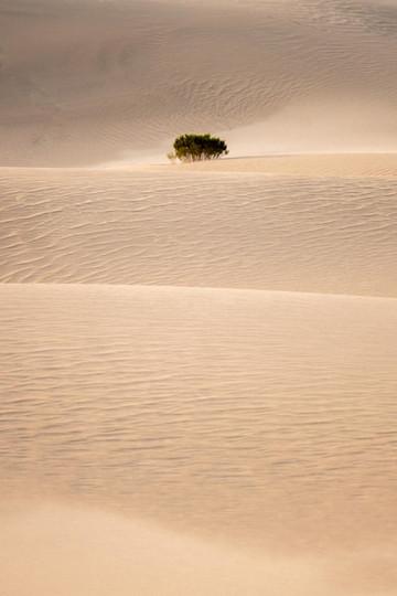 Sand and bush