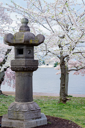 Japanese Tea Lantern