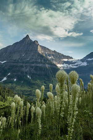 Mountain and Bear Grass
