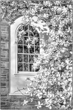 Church window & magnolia blossoms
