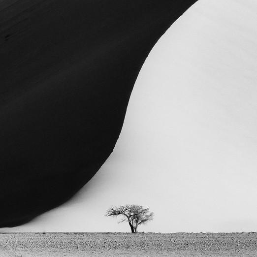 Acacia tree and sand dune