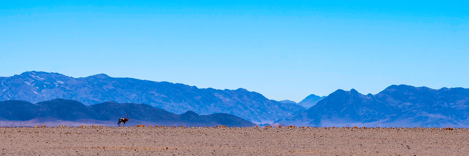 An oryx against a mountainous background