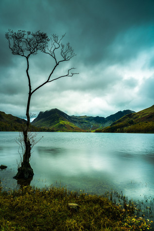 The Lone Tree - Buttermere Lake