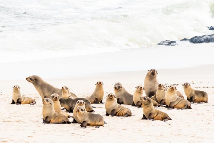 Fur seal kindergarden