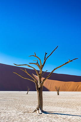 Deadvlei - ancent trees surronded by immense sand dunes
