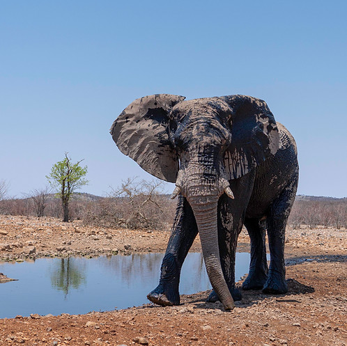 A beautiful giant