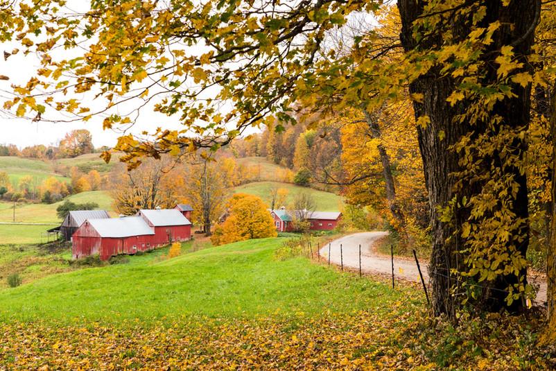 Jenn Farm
