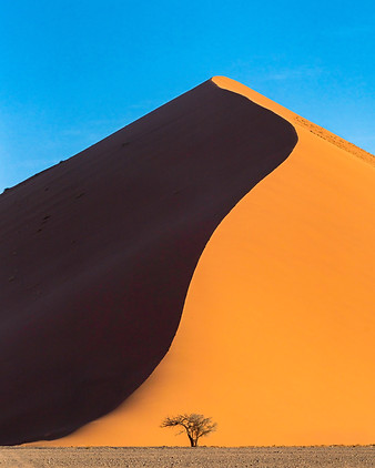 Lone tree at a sand dune in Sossusvlei