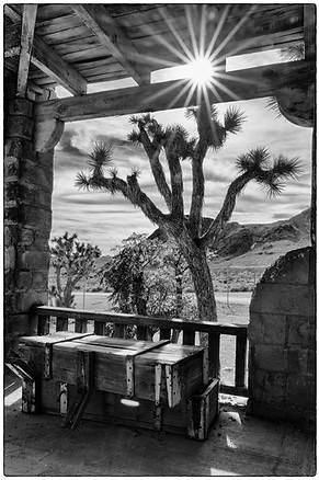 Sunburst and Joshua tree off the porch