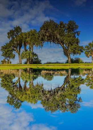 Colonial Reflections