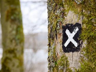 tree-2597105_1920.jpg