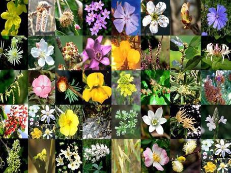 Terapia Floral – Descubra os Benefícios da Terapia que mais Ganha Adeptos para Equilibrar as Emoções