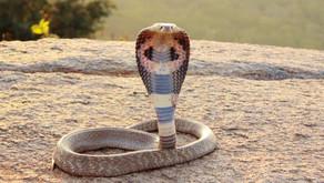 Avoiding the Cobra Effect