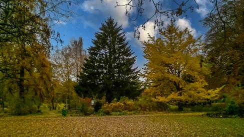 Kurpark Herbst 1.jpg