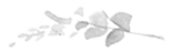 1470932682-Flora-Flowers-1.png