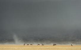 Sandstorm in the Gobi Desert