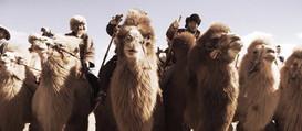 Thousand Camel Festival