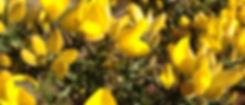 may bush.jpg