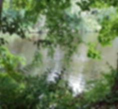 park lake (2).jpg