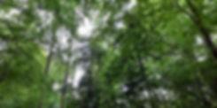 light through trees (2).jpg