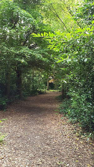 path and trees (2).jpg