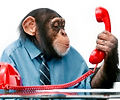 monkey using telephone.jpg