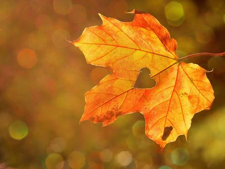 Le doux repli de l'automne