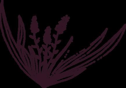 Herbes 2.png