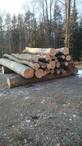Brennholz,Buche