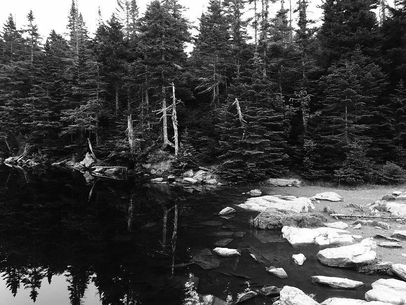 pond2.jpeg