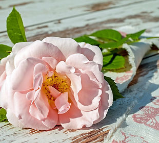 rose-2378156_1920.jpg