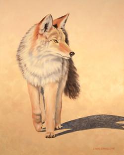 Coyote Cruisin'  Oil  20x16   lindabarnsley.com