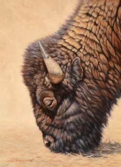 Bison Study  Oil 12x9  lindabarnsley.com