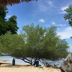 バリ島トランスポートTaGO