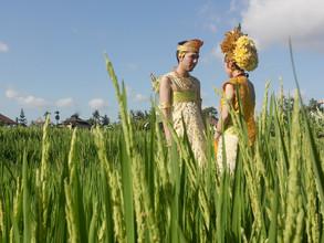Rice Terrace Photo