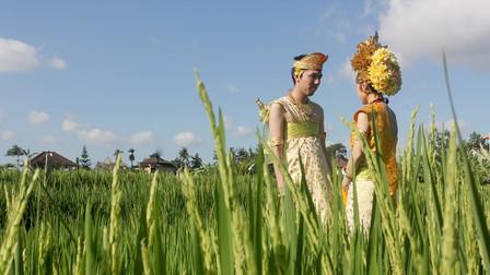 Balinese Rice Terrace Photo