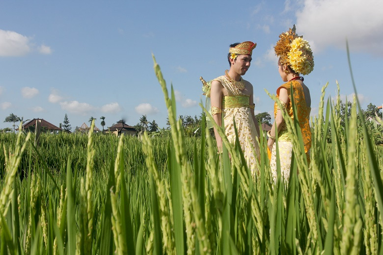 Balinese Rice Terrace Photo