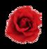 niki's rose1.png