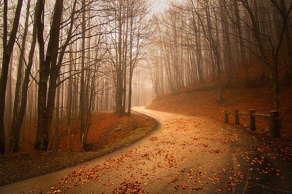 065 - B1 - Un sentiero d'autunno.jpg