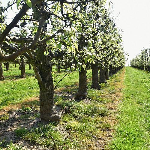 Fruitse Hageland