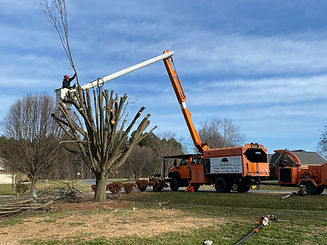 Tree-Topping.JPG