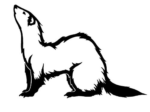 Black Footed Ferret Vinyl Decal