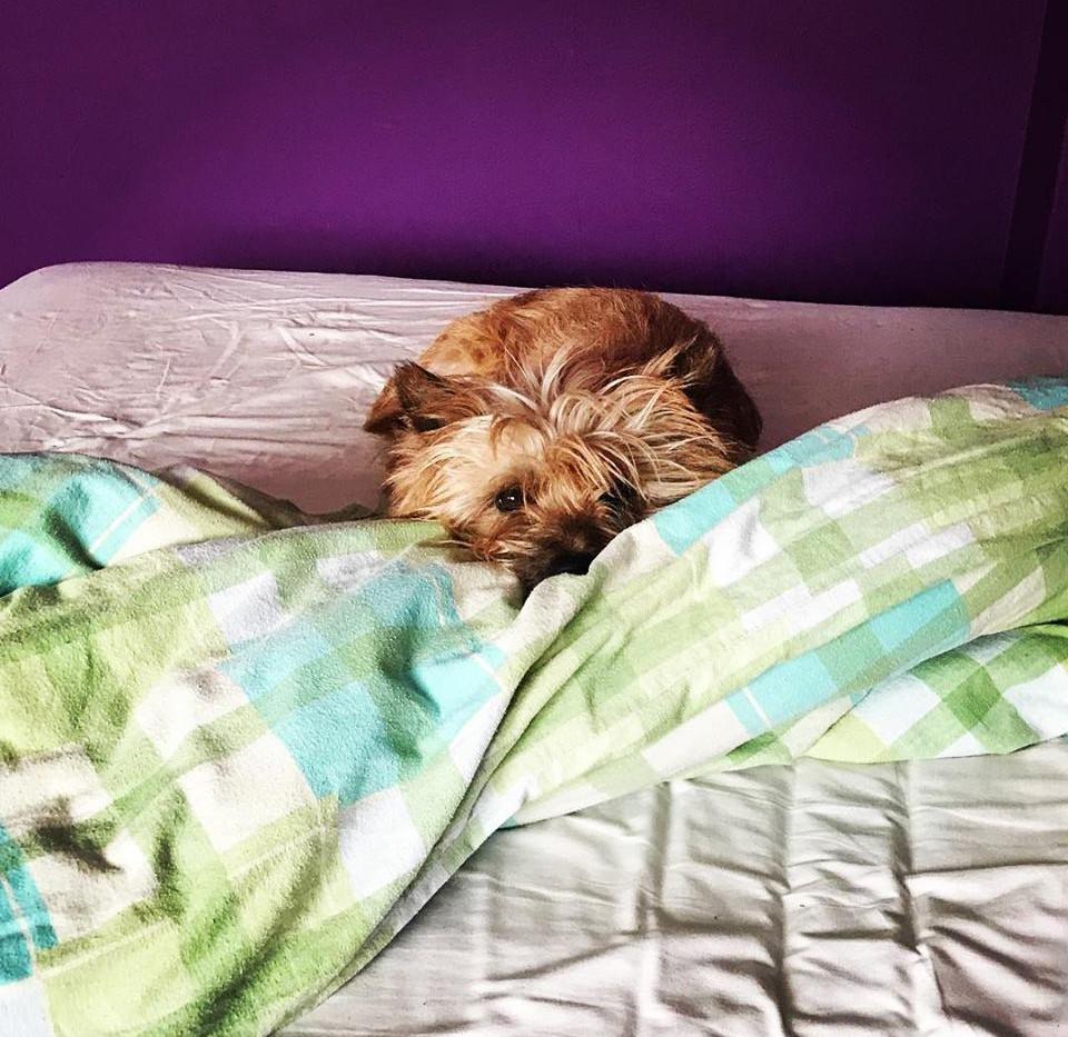 Fredi nie wychodzi dziś z łóżka