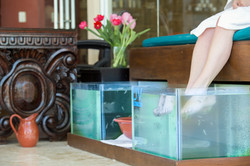 terapia de peces spa holistic