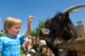 Dovolená v Rakousku s dětmi - zvířata