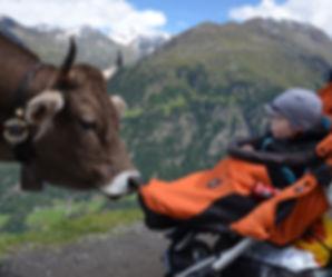 Dovolená v Rakousku s dětmi - kráva