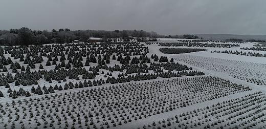 L L Snow.png