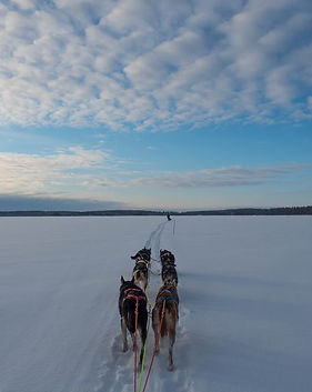 5km dog sleddng tours in Kuuamo