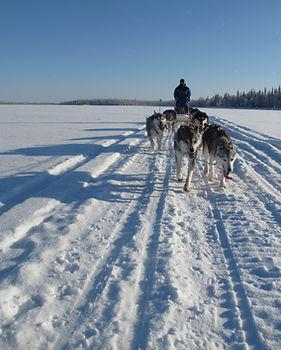 10km dog sledding tour with snack